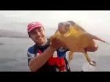 Черепаха плыла прямо к лодке  с просьбой о помощи!