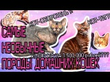 ШОК!Новая пугающая порода кот-оборотень и кот за 3млн рублей ! AVEME LISSA