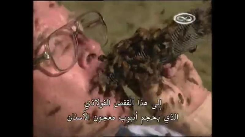 У Человека Во Рту Медоносные Пчелы !