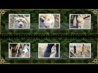 Собачий дворик представляет Фото альбом с дрессировки Маффина и Боси