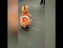 Чарівна дитина одягнена як риба клоун