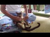 Кот на тайском массаже