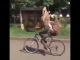 Забавная сценка на улице в Эфиопии.