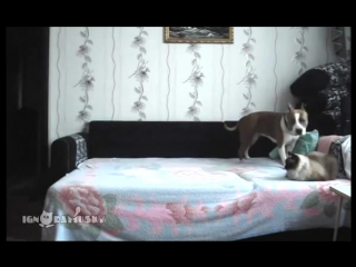 When_the_dog_stays_at_home_alone___Пока_никто_не_видитignoramusky127
