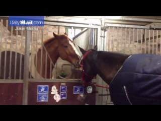 That's what friends are for: Horse helps friend remove harness