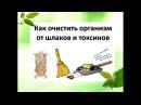 Оксана Мицкевич Очищение организма травами и народными методами