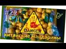 Обман на рынке! Китайские мандарины вместо абхазских! Андрей_Счастье сыроедение фрукторианство raw
