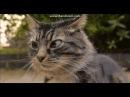 Клинт Иствуд и кот 2016 12 26 19 36 01 376