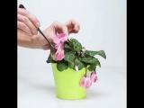 Как реанимировать цветы в горшках. Домашнее удобрение