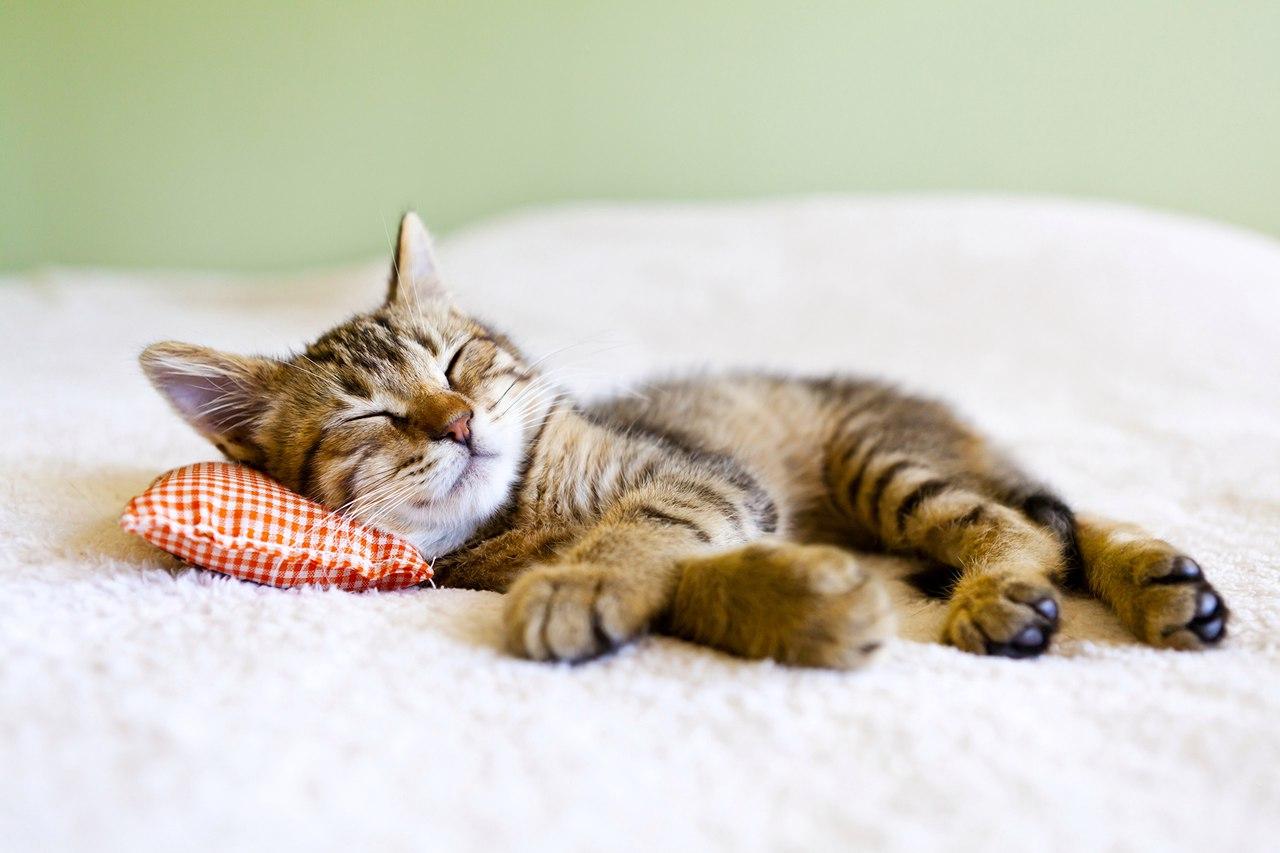 медитация на сон, музыка для сна