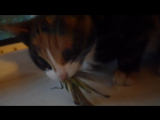 Кошка Vs. Саранча