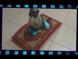 Кот на ковре самолете. Арабская ночь! Ржака, очень смешно!) Смешные животные
