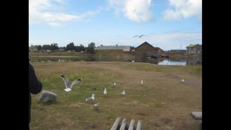 Мама кормит птиц на Соловках (2011)