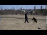 JAGGER v BACCARA 140517 видео №2