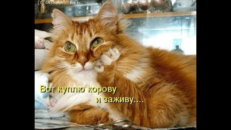 Смешные Фото С Надписями До Слез. Забавные Животные.