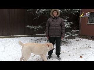 Хороший щенок азиат, опасное рычание во время игры, дрессировка алабай, САО