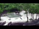 В зоопарке Сеула слоны вытащили тонущего детеныша из воды
