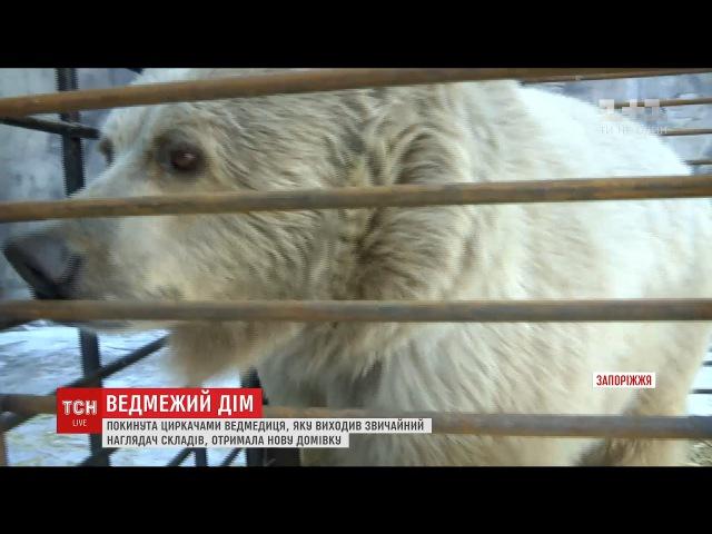 У Запоріжжі прихистили ведмедицю Чади , яку покинули напризволяще циркачі