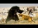 Бои животных поймали на камеру - Собака Vs Медведь кабанов, крокодилов, змей.