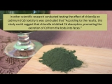 Learn About Chlorella Algae and How It May Help Detox Heavy Metals