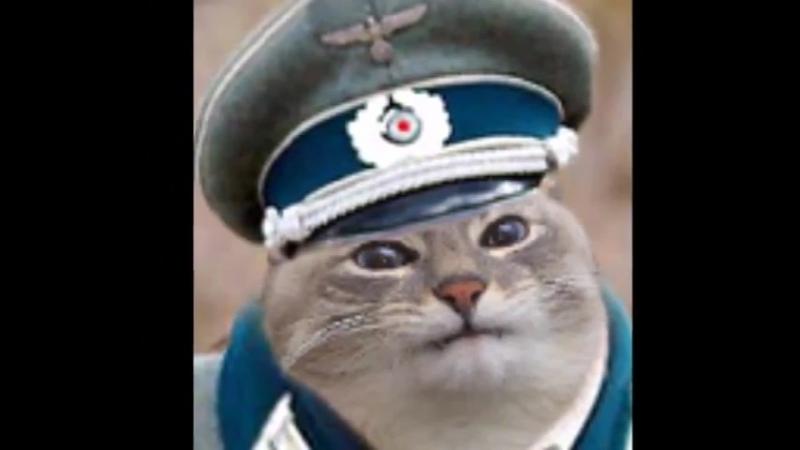 Айн Цвай Полицай