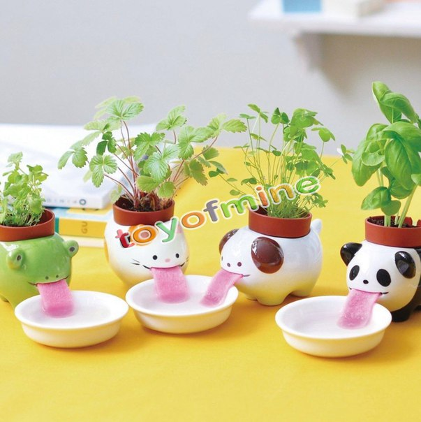 Очень крутые горшки  https://ru.aliexpress.com/store/product/Cute-Ceramic-Cultivation-Peropon-Drinking-Animal-Planter-Cute-Animal-Tongue-Pot-Ceramic-Self-Watering-Planter/2025073_32699587862.html?detailNewVersion=&categoryId=100005865