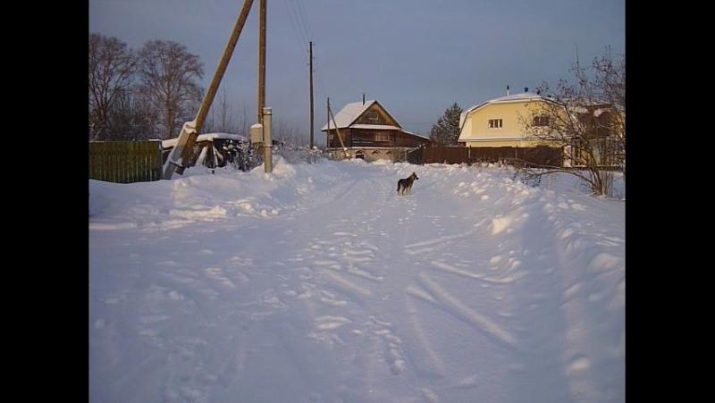 Деревня Кузнецы пес Тайсон