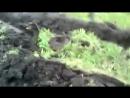 МТЗ, ЮМЗ Легендарные трактора в грязи и не только!Cмотреть видео онлайн подборку.
