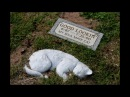 Грустная история о коте!До слёз!