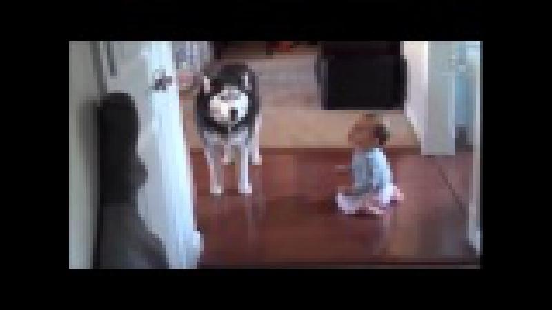 Вот что бывает если оставить собаку наедине с ребенком Ты растаешь при виде эт