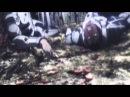 Клип AMV по аниме Terra Formars Терраформирование GAN
