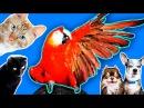 Попугай сбежал и троллит животных! Собаки и кошки VS Попугай Ара, зоопарк Magic Family - YouTube