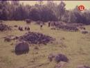 Дорога домой. (1969).
