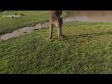 Защита страуса