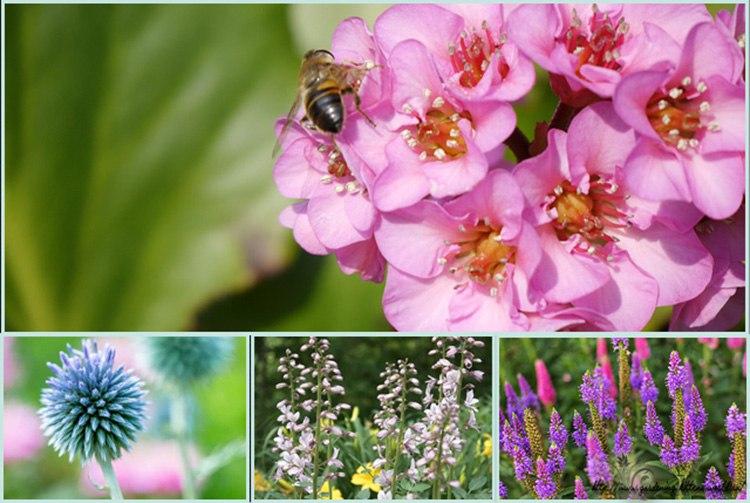 Неприхотливые многолетние цветы для дачи. Часть 1