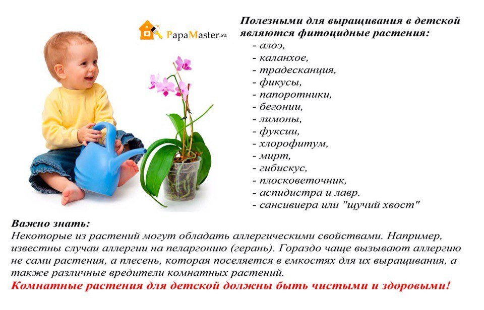статьи о растениях из  газет и журналов - Страница 2 _o-hFVBvheU