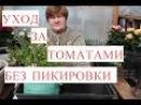 Выращивание Томатов без Пикировки. Рассада в Улитке. (25.03.2017)