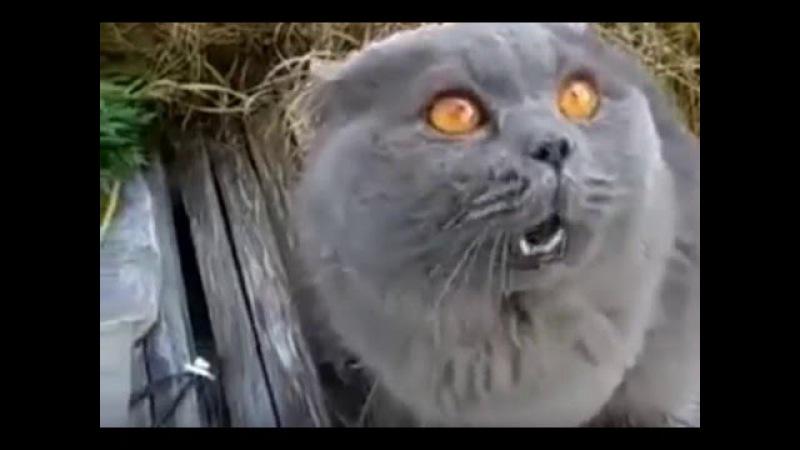 Говорящий смешной кот Ругается на хозяина