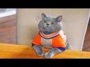 Приколы с Котами - Смешные коты и кошки 2017 ПОПРОБУЙ НЕ ЗАСМЕЯТЬСЯ - смешное видео про котов