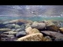 Рыбалка на реке м Казыр Подводные съемки Хариуса