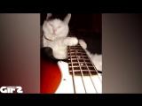 #67 Гифки со звуком  Прикольные видео подборки! vk.comgifswithsound