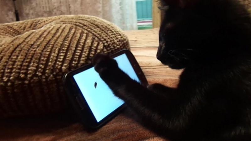 наш Васька играет с мышкой на телефоне