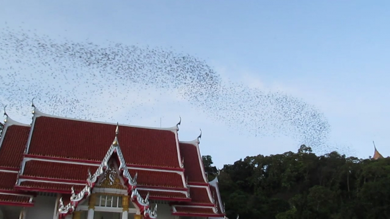 Вечерний исход летучих мышек из пещер около храма Летучих мышей в Таиланде. Провинция Ратчатабури.