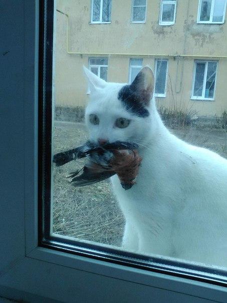🐾Пропал кот , зовут Нолик🐈 На шее голубая резинка . Нашедшему вознагра