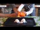 Опыт первый - Яйца динозавров