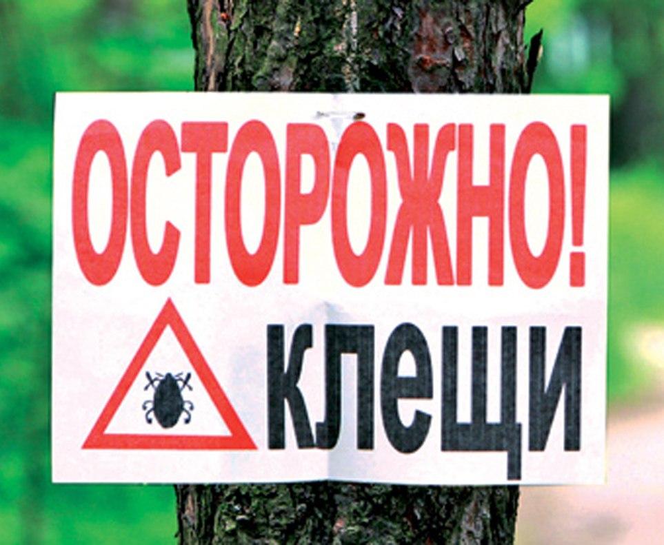 Пятеро граждан  Карелии заболели клещевым энцефалитом всамом начале  эпидсезона