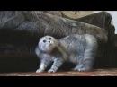 Кот рокер смешное видео необычная ситуация хахаха весело приколы,funny videos