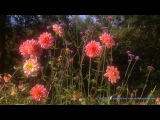 Nature DVD Four Seasons - Spring Scenery of Flowers With Natural Sounds
