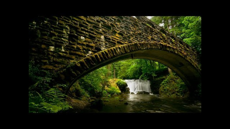 BBC _ Таємниці природи: Сезонні ліси