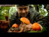 Цезарский гриб (мухомор цезаря) - вкусный гриб на Черном море (Геленджик) www.grib.tv